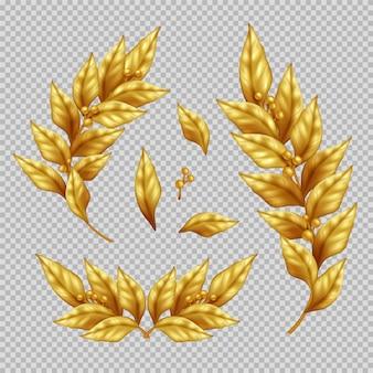 Conjunto realista de ramas y hojas de laurel dorado en ilustración aislada transparente
