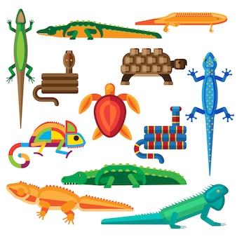 Conjunto de reptiles.