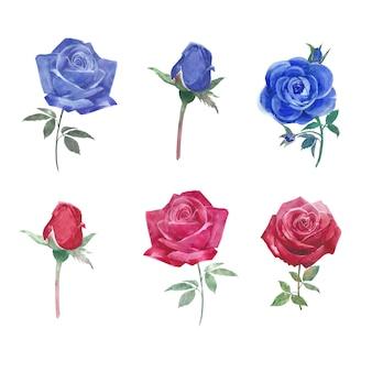 Conjunto de rosas vibrantes acuarela, dibujado a mano ilustración de elementos aislados en blanco.