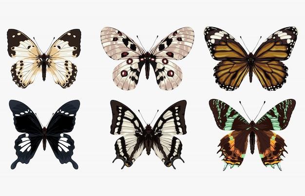 Conjunto de seis ilustraciones de mariposas únicas y hermosas.