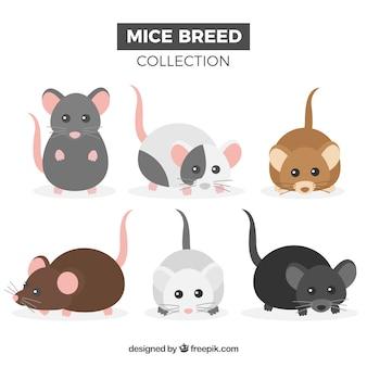 Conjunto de seis ratones domésticos