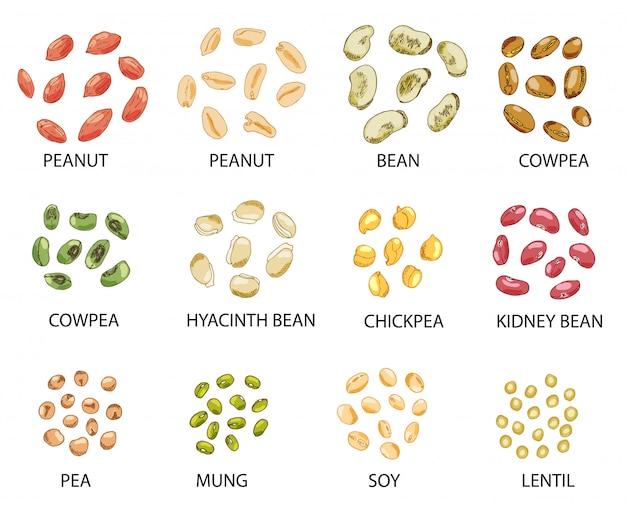 Conjunto de semillas de frijoles de colores dibujados a mano