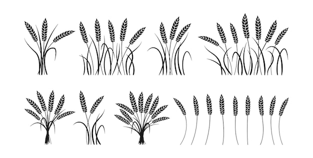 Conjunto de silueta negra de dibujos animados de orejas de trigo gavilla, colección madura de grano de racimo, producción de harina agrícola