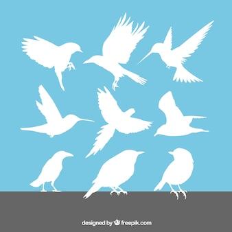 Conjunto de siluetas de aves