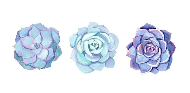Conjunto de suculentas acuarela azul aislado en blanco