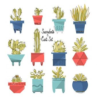 Conjunto de suculentas y cactus en macetas coloridas.