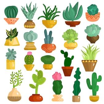 Conjunto de suculentas de cactus en macetas