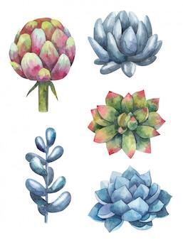 Conjunto de suculentas, cactus, plantas ilustración acuarela sobre un fondo blanco.
