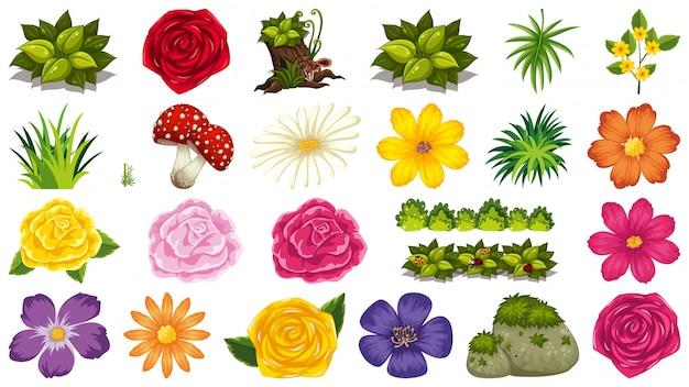 Conjunto de tema de objetos aislados - flores