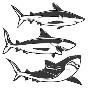 Conjunto de tiburones aislado en blanco