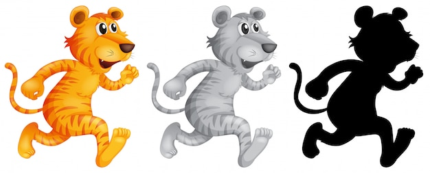 Conjunto de tigre corriendo