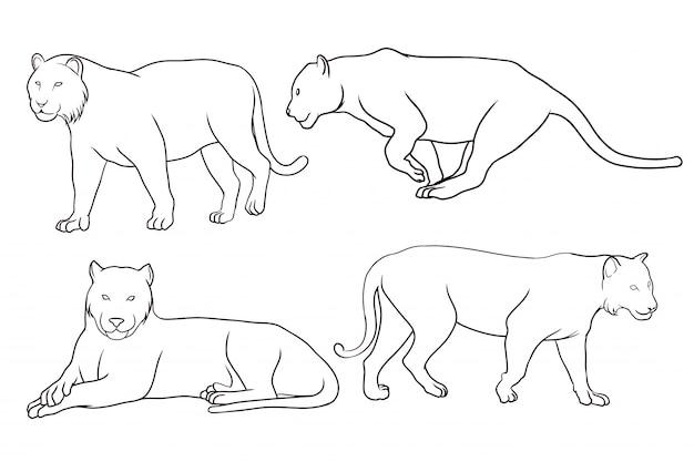 Conjunto de tigre dibujado a mano
