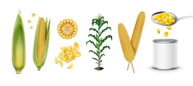 Conjunto de tipos de maíz: mazorcas de maíz, planta de maíz, granos de maíz, maíz enlatado en realismo aislado en blanco