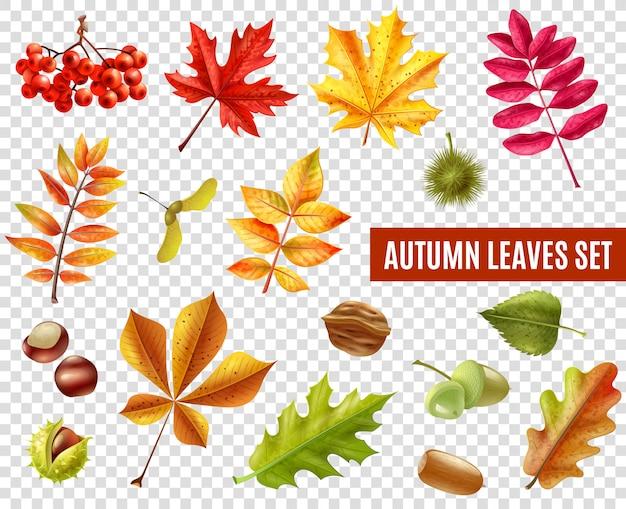 Conjunto transparente de hojas de otoño