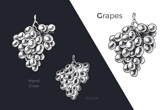 Conjunto de uvas dibujadas a mano
