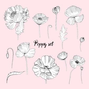Conjunto de varias amapolas. colección de flores de contorno. dibujado a mano en blanco y negro ilustración.