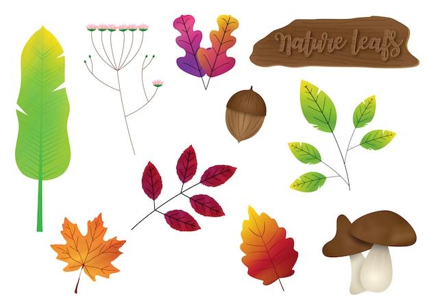 Conjunto de variedad naturaleza hojas con cartel de madera aislar