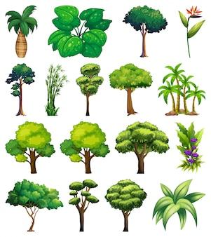Conjunto de variedad de plantas y árboles.