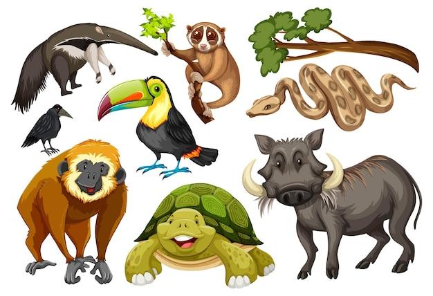 Conjunto de varios animales salvajes sobre fondo blanco.