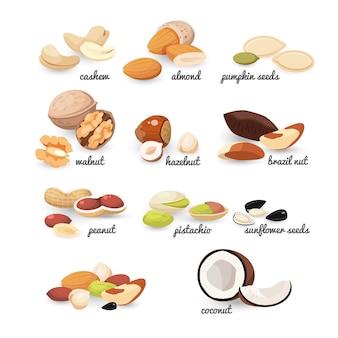 Conjunto de varios frutos secos y semillas, colorida ilustración plana