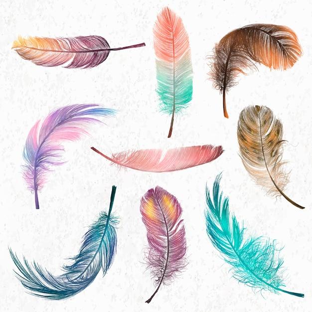 Conjunto de vector de elemento de pluma colorida