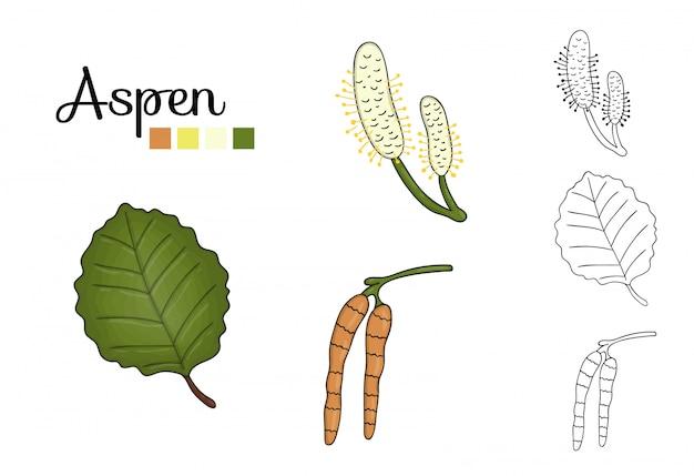 Conjunto de vector de elementos del árbol de álamo temblón aislado. ilustración botánica de hoja de álamo temblón, brunch, flores, frutas. imágenes prediseñadas en blanco y negro.