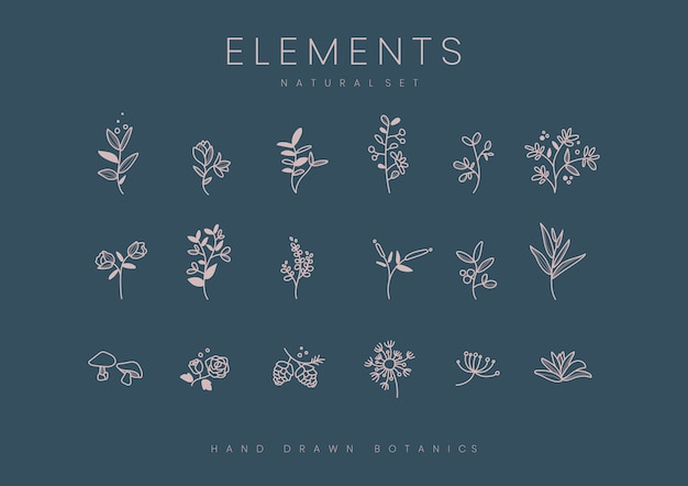 Conjunto de vector de elementos botánicos dibujados a mano
