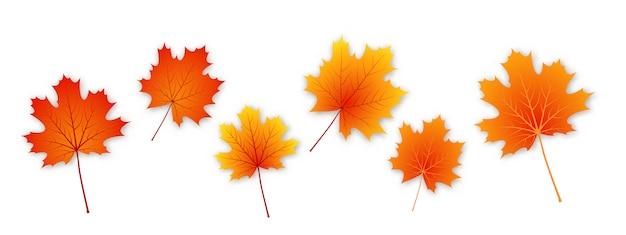 Conjunto de vector otoño hojas de arce.