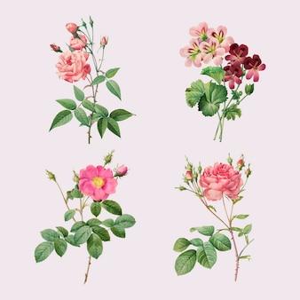 Conjunto de vector de rosa y geranio vintage