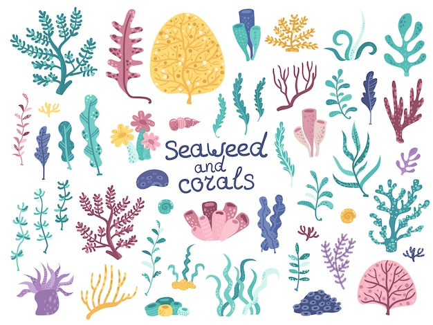 Conjunto de vectores de algas y corales.