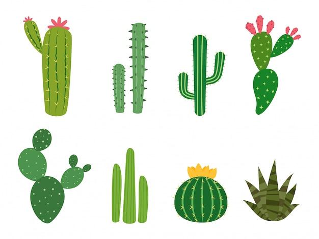 Conjunto de vectores de colecciones de cactus