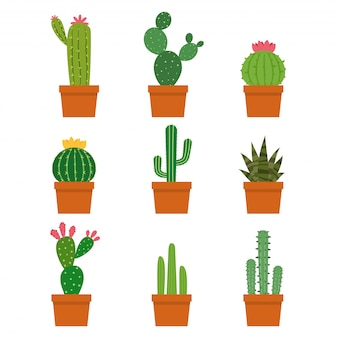 Conjunto de vectores de colecciones de plantas de cactus