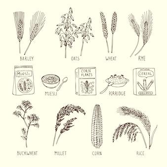 Conjunto de vectores de diferentes cereales. muesli, trigo, arroz y otros.