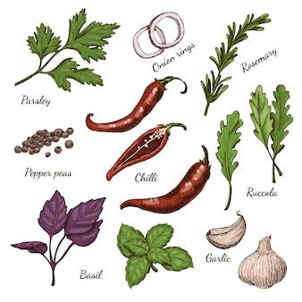 Conjunto de vectores de diferentes colores especias y hierbas