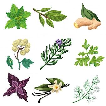 Conjunto de vectores de hierbas y especias.