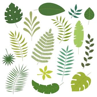 Conjunto de vectores de hojas tropicales.