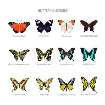 Conjunto de vectores de mariposas en el diseño de estilo plano. diferentes tipos de colección de especies de mariposas. aislado