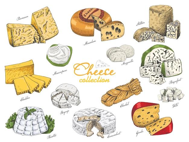 Conjunto de vectores de quesos de diferentes colores