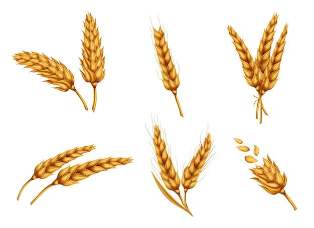 Conjunto de vectores realista de oro espigas y granos de trigo