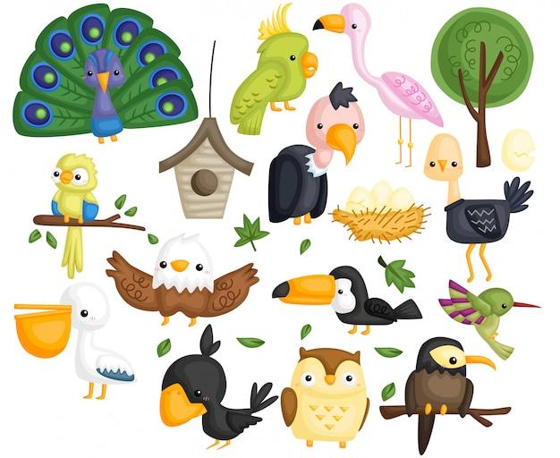 Conjunto de vectores de tipo de pájaro
