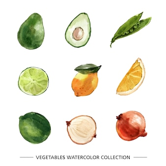 Conjunto de vegetales acuarelas