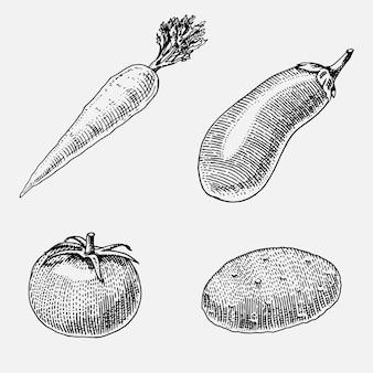 Conjunto de vegetales dibujados a mano, grabados, comida vegetariana, plantas, zanahoria, patata y tomate de aspecto vintage, berenjena.