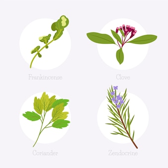 Conjunto verde de hierbas de aceite esencial
