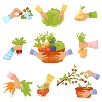 Conjunto de verduras en cestas y manos.