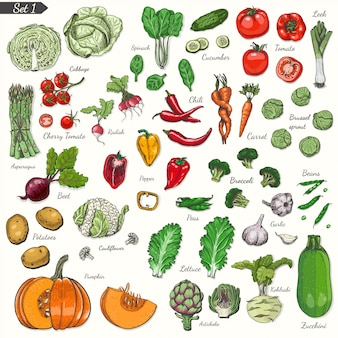 Conjunto de verduras en estilo boceto