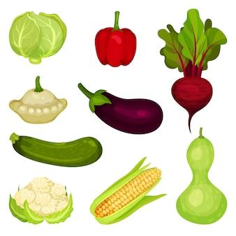 Conjunto de verduras frescas. comida sana. productos agrícolas naturales. ingredientes para ensalada. elementos gráficos para el cartel promocional de la tienda de comestibles.