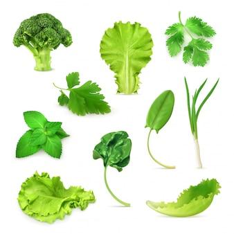 Conjunto de verduras y hierbas verdes, comida vegetariana orgánica, ilustración vectorial aislado