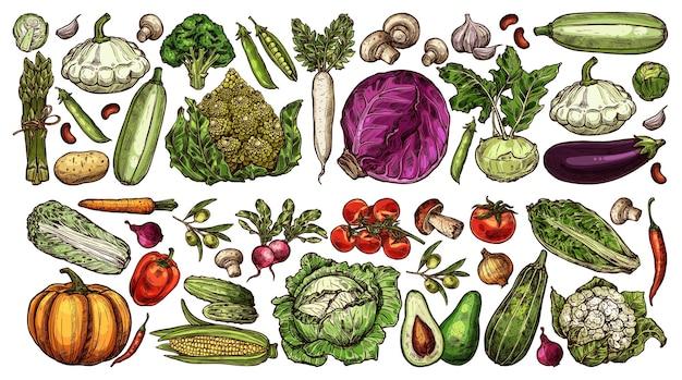 Conjunto de verduras maduras de granja y jardín dibujado a mano