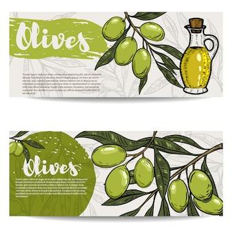 Conjunto de volantes de aceite de oliva. rama de olivo. elementos para, folleto, cartel. ilustración