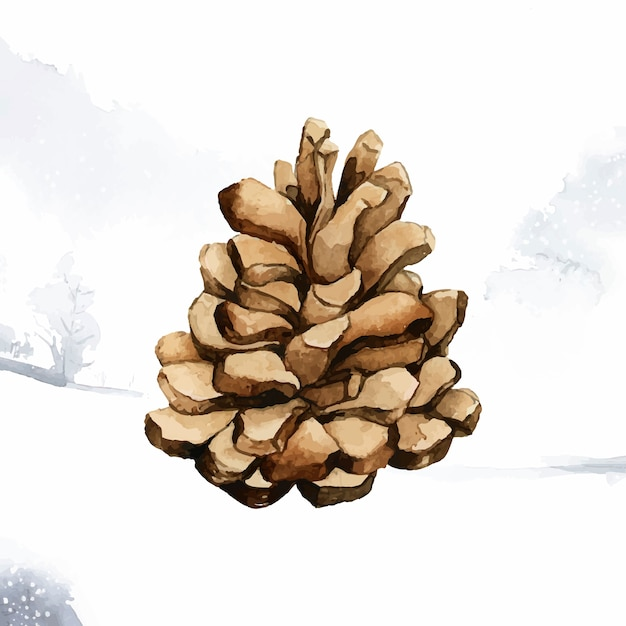 Cono de pino pintado por acuarela vector